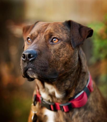 Dawndra's dog Bruce